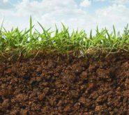 A talajélet helyreállítása: baktériumtrágya