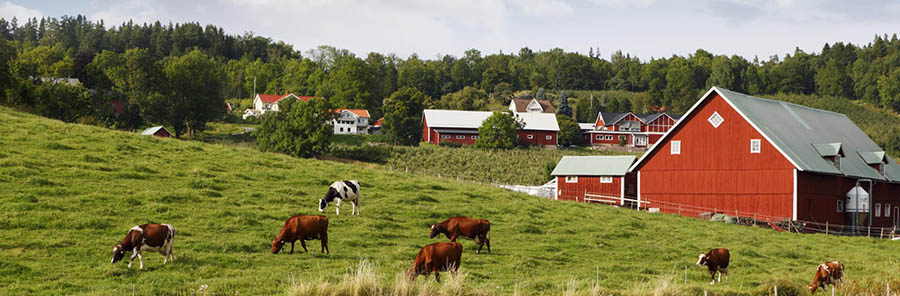 GLOBALGAP: az elsődleges élemiszer termelés élelmiszer biztonsági szabványa