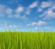GMO mentes élelmiszer, GMO mentes takarmány